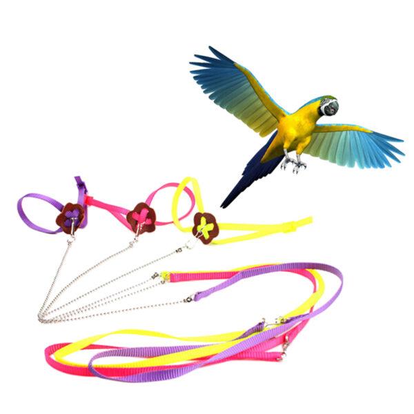 Parrot Harness & Leash
