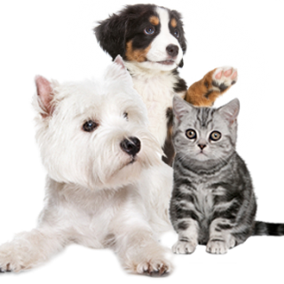 7 Natural Remedies That Can Benefit Your Pet