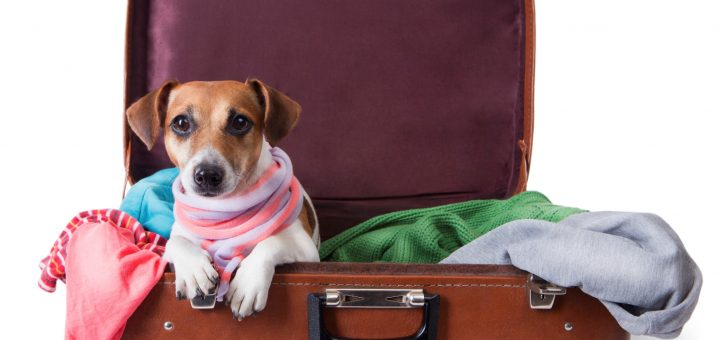 Checklist traveling abroad with your dog.